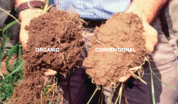 Productive organic farming; destructive GM feed! | ACORN ...